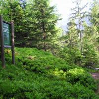Jagdlehrpfad - Wanderweg auf den Danielsberg